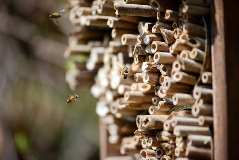 Lots of bees going home to a bee hotel.