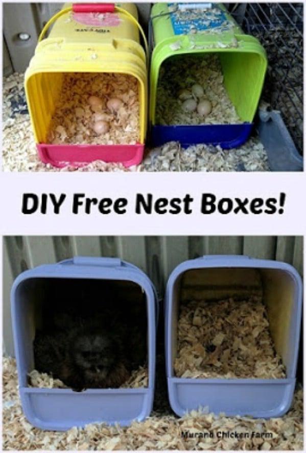 Litter box chicken nest
