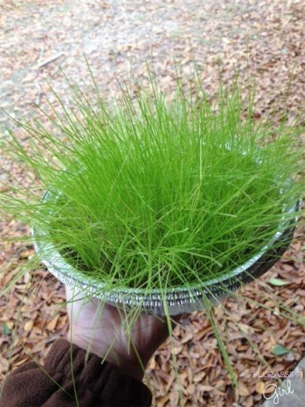 Pan of grass