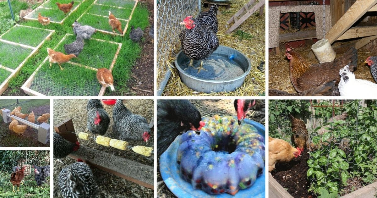 25 Lifehacks and Tips For Raising Backyard Chickens That ...