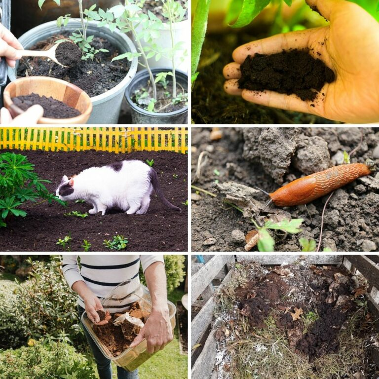 Coffee ground uses for garden collage