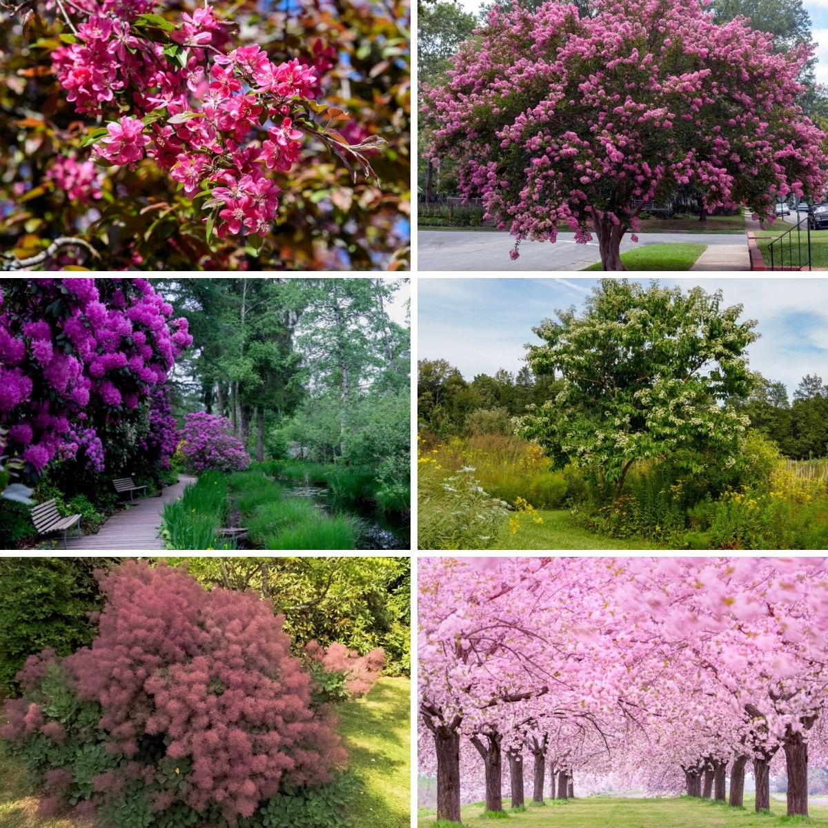 Collage photo featuring flowering trees and shrubs.