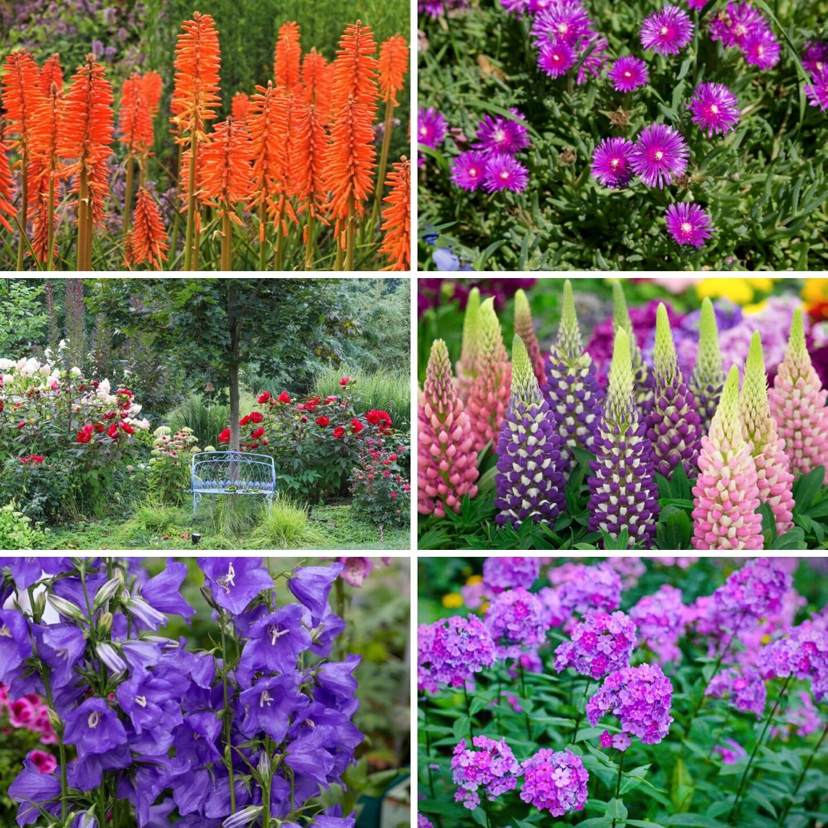 Collage photo of the long blooming perennial flowers.