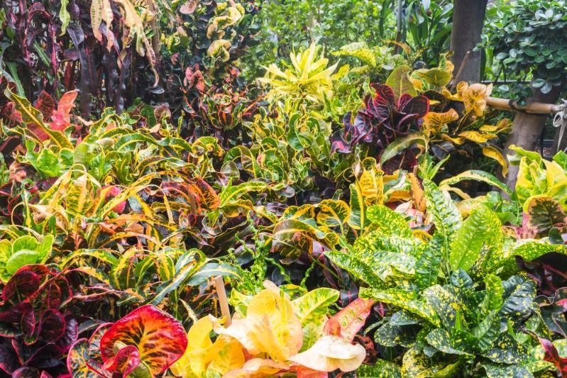 Colorful ornamental plants.