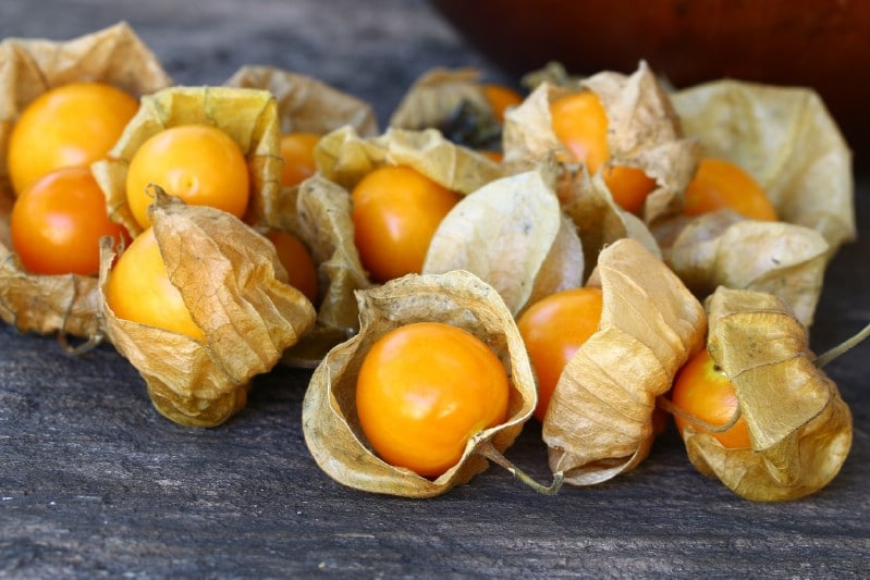Ground Cherries - Berry bushes to grow in your garden