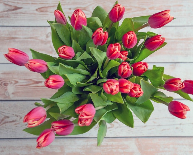 Fresh tulips in a vase.