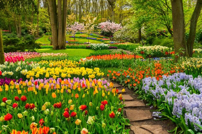 Gorgeous blooming flower garden.