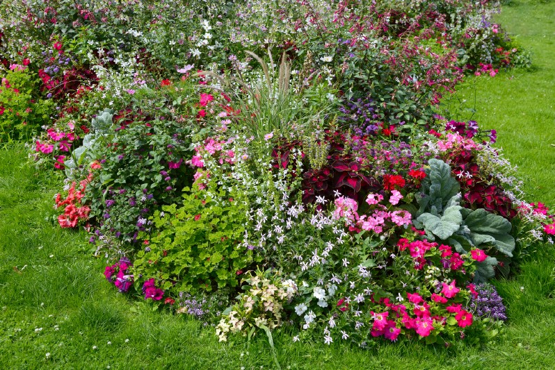 Colorful garden with lots of flowers