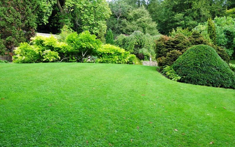 Healthy lawn treated with Epsom salt.