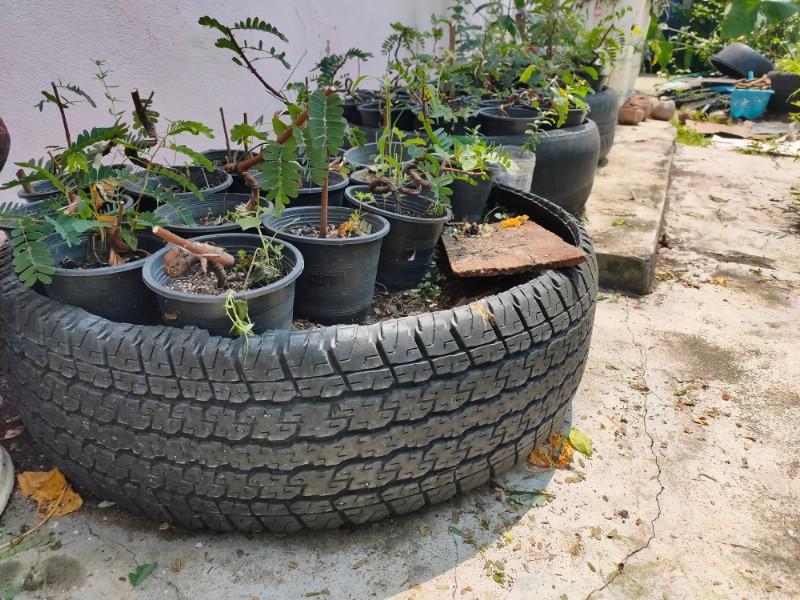Create a Terrace Garden