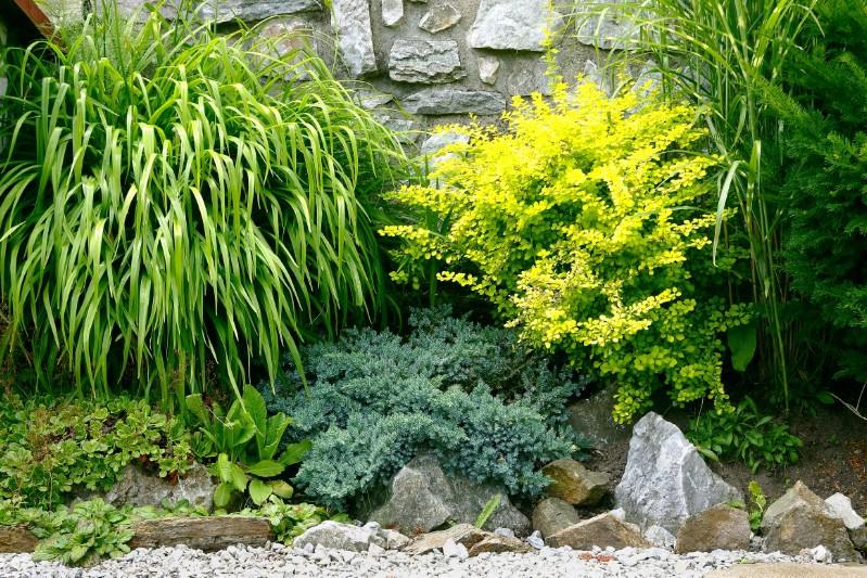 Backyard shrubs.