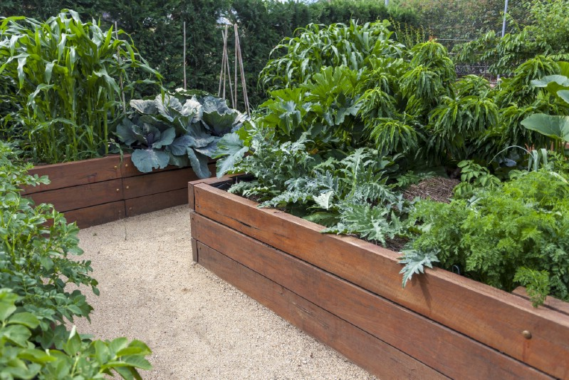 Well organized vegetable garden using raised garden beds.