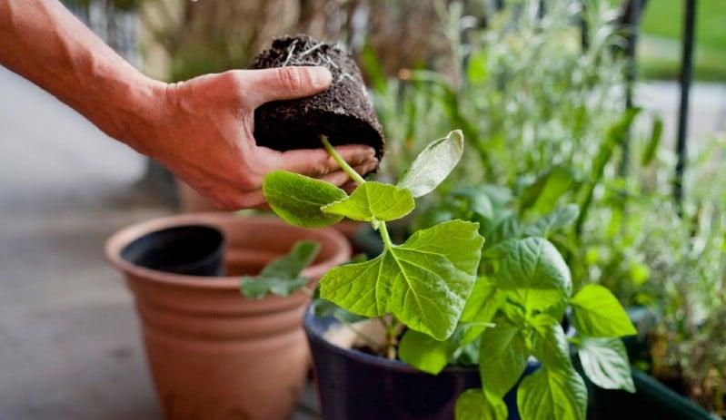 Gardener re-plotting plants.