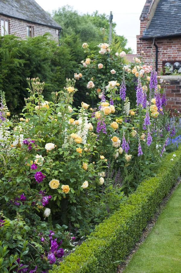 Hyacinth rose garden
