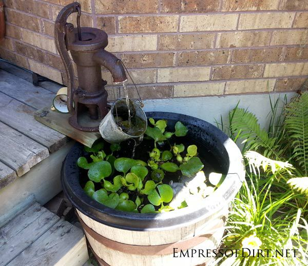 Bucket lily pond