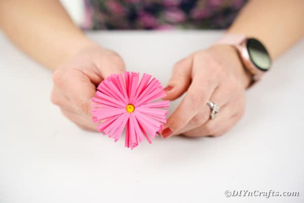 Forming pink flower