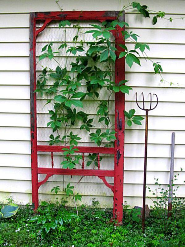 Door frame trellis