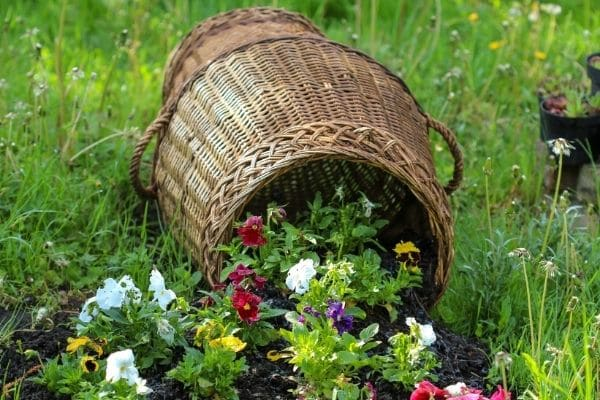 Colorful flowers spilling out of wicker basket