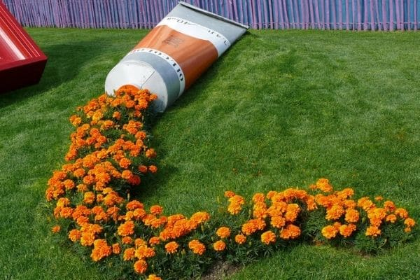 Marigolds spilling out of fake paint tube