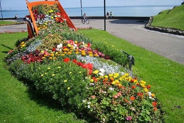 Wheelbarrow of rainbow flowers
