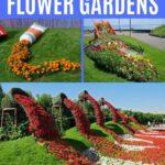 Spilled flower collage