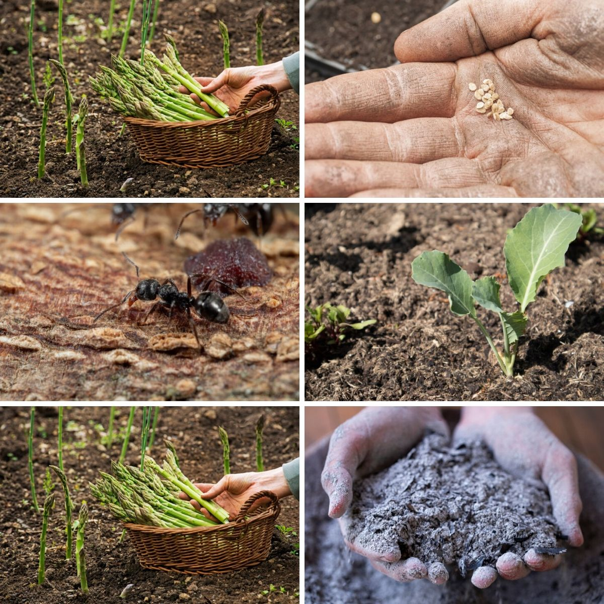 Collage photo featuring various uses for wood ash in the garden