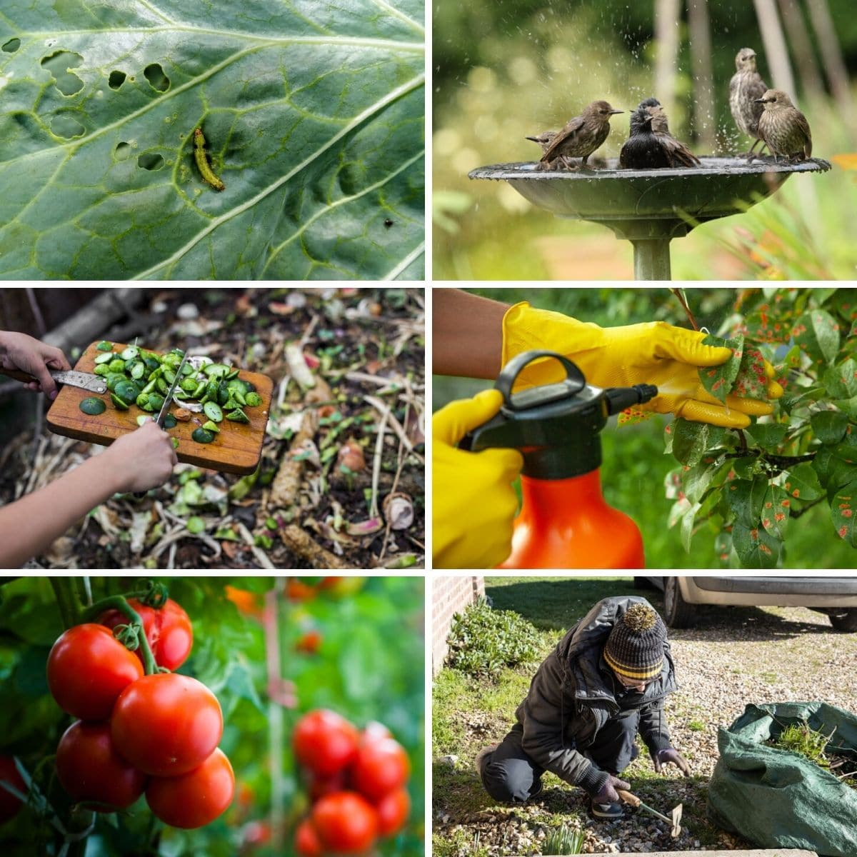Collage photo featuring various uses for baking soda in the garden from the post content.