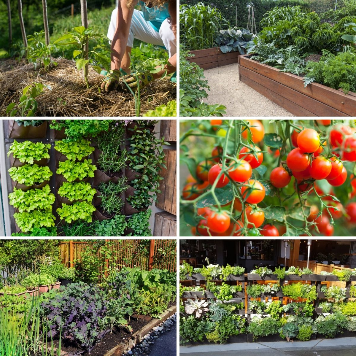 Photo collage featuring photos from the high yield gardening tips from the article.