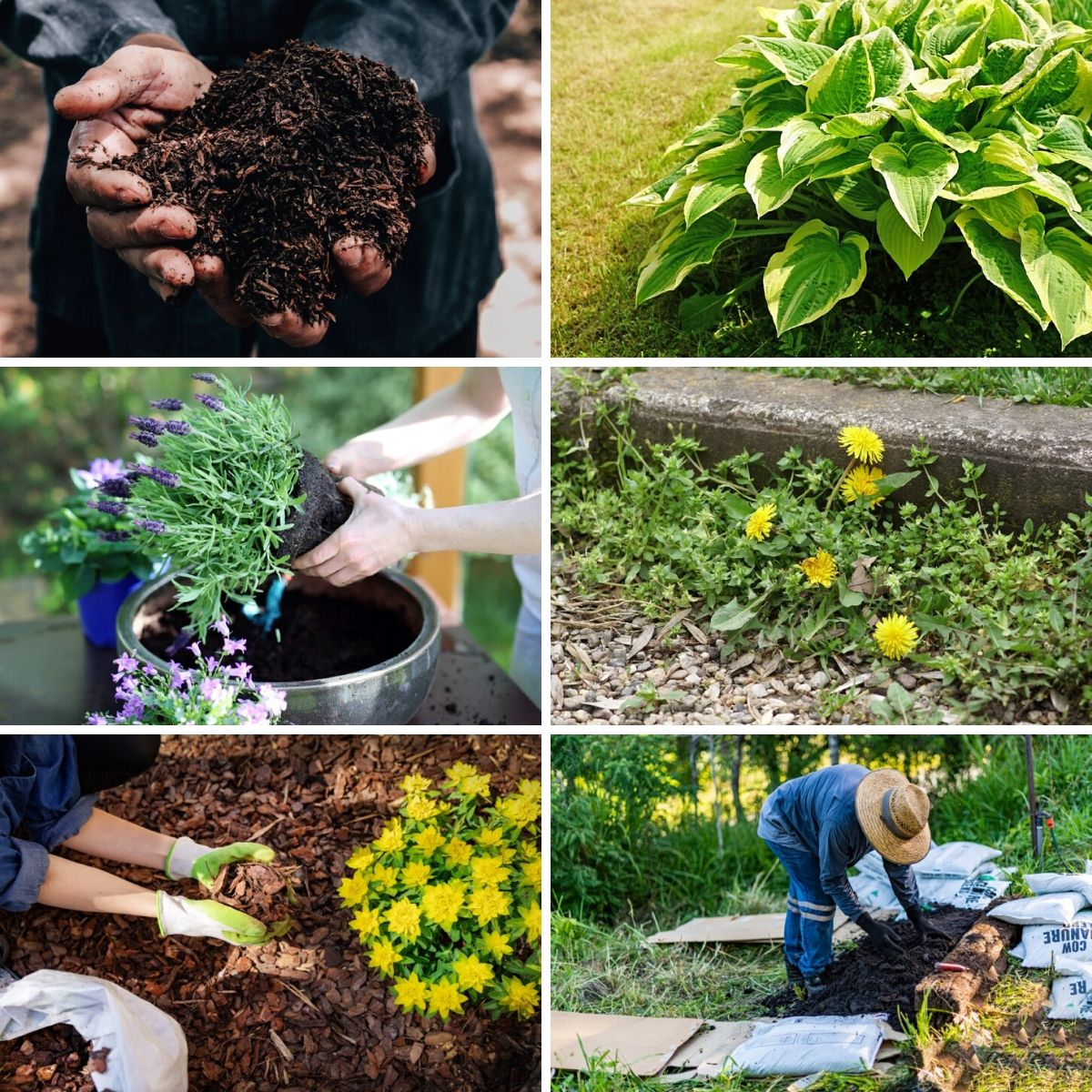 Photo collage featuring items from the perennial gardening mistakes list.