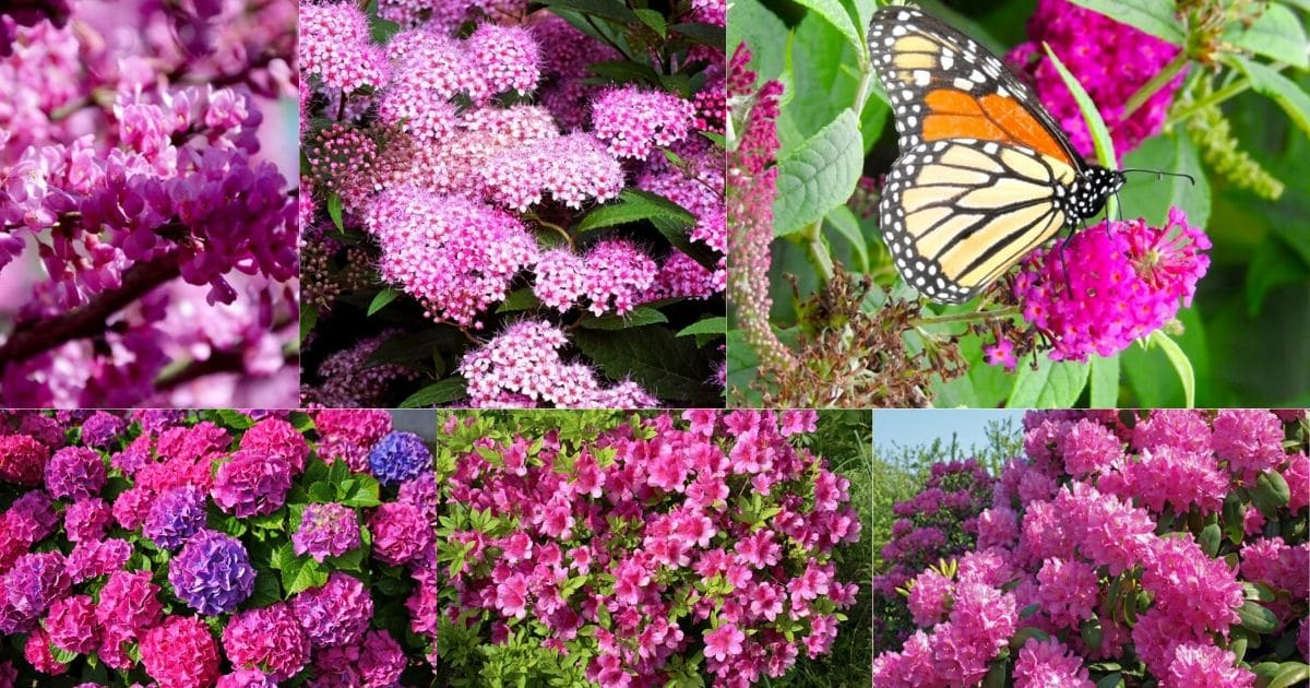 26 Gorgeous Pink Flowering Shrubs For Your Garden Diy Crafts
