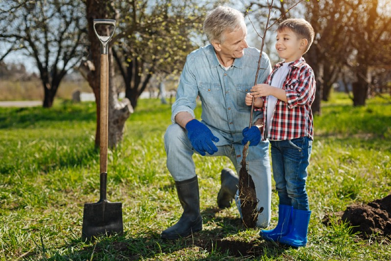 Little boy and granddad planting a tree.