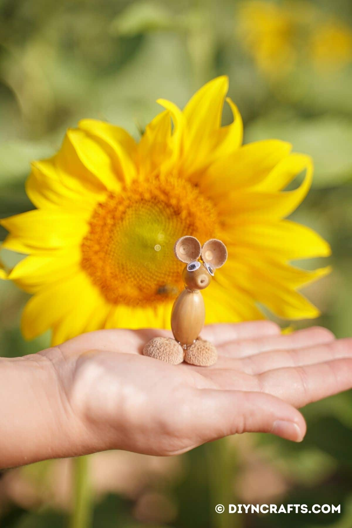 The hand holding the acorn mouse in front of the sunflower