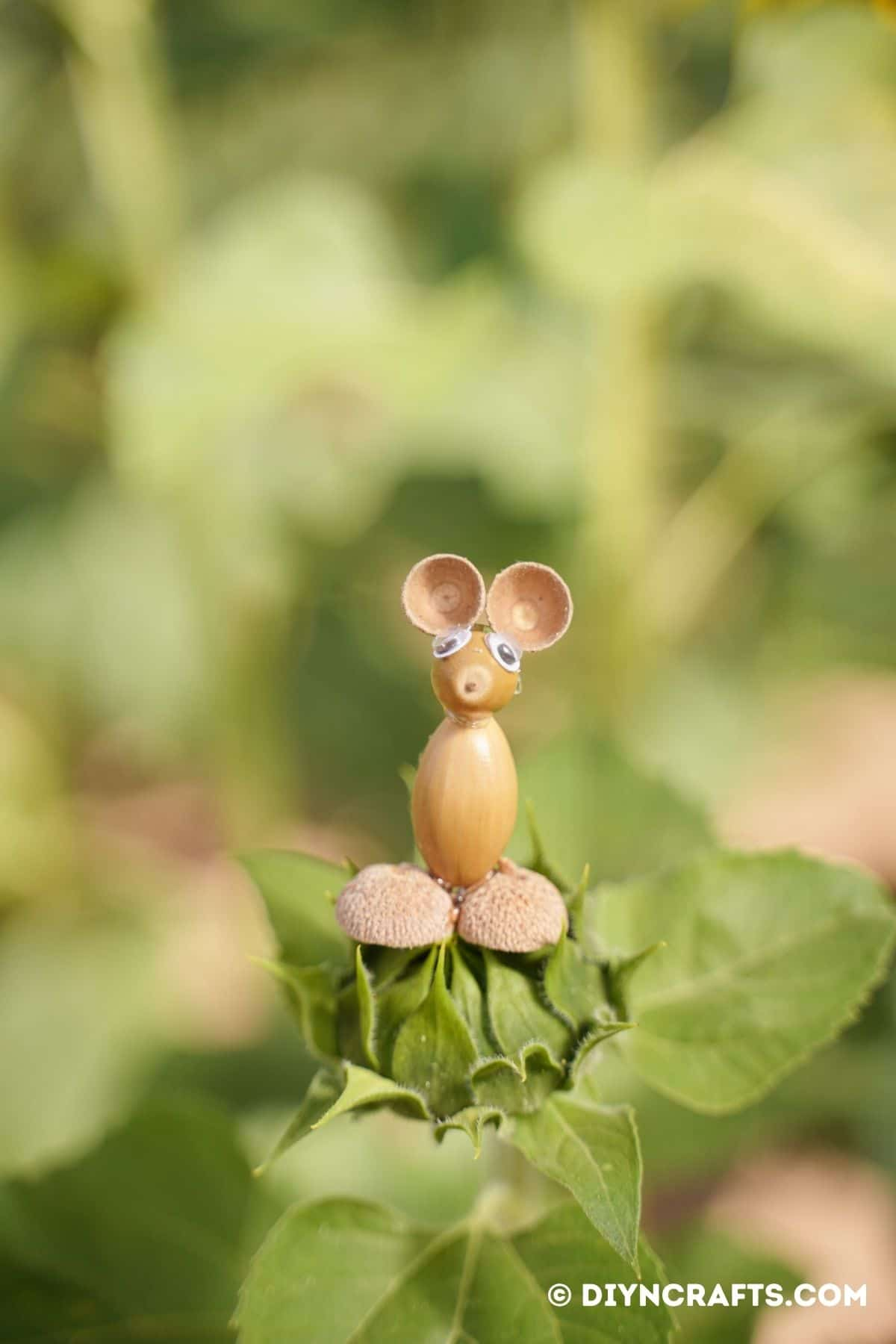Acorn mouse sitting on green bud