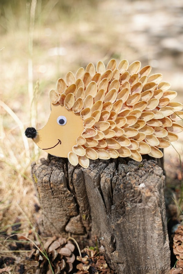 Pistachio hedgehog on stump