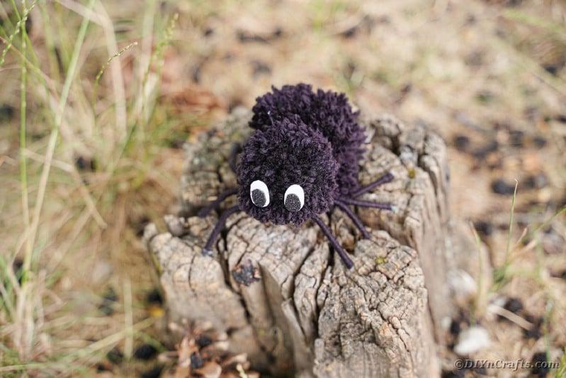 Pom pom spider on stump