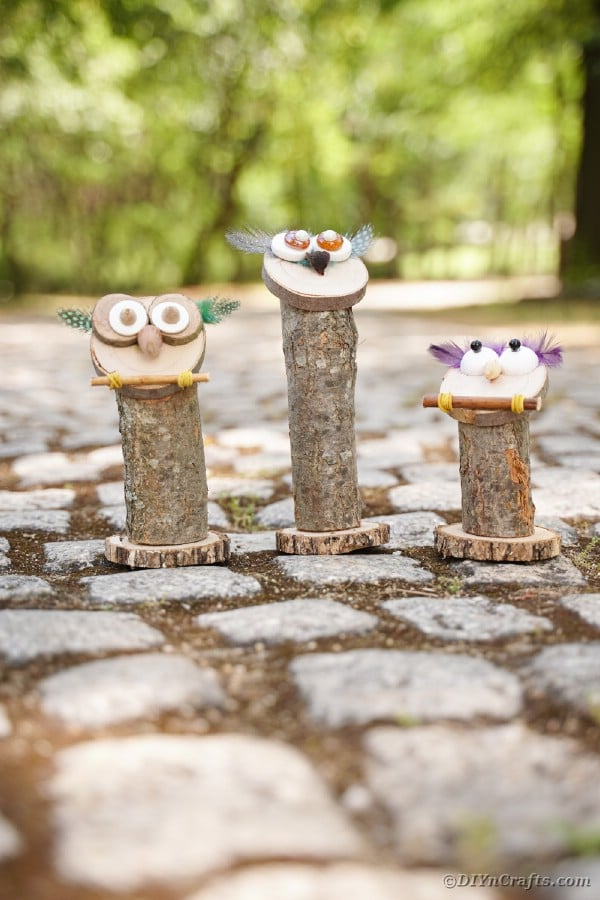 Trio of owls on cobblestone