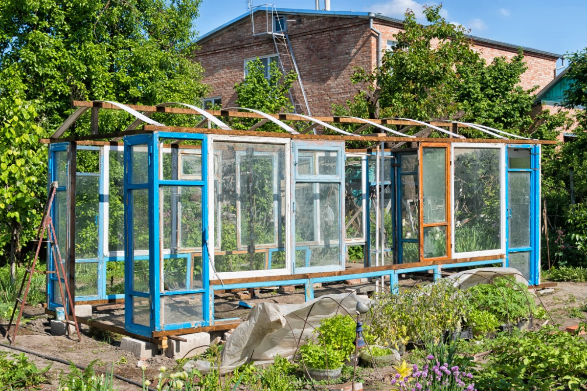 Old windows greenhouse.