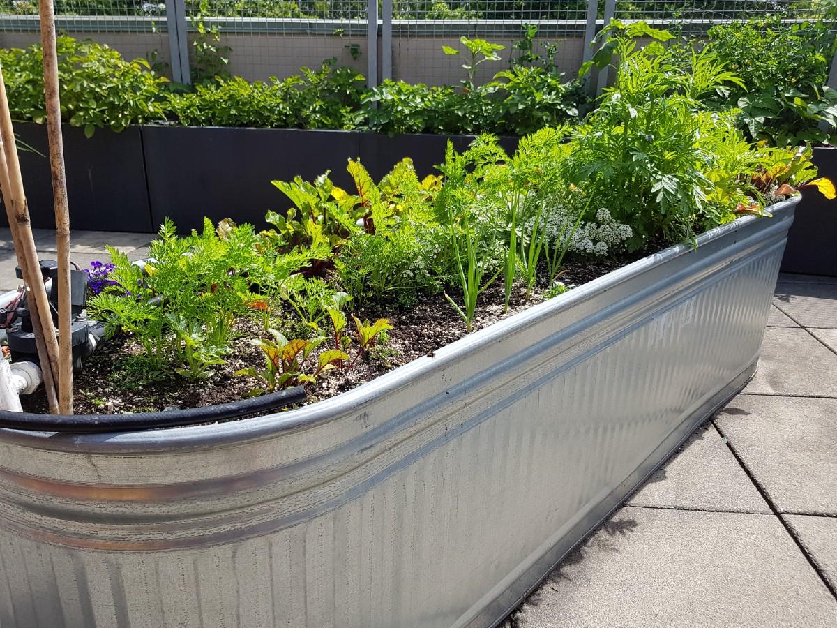 Stock tank planter.