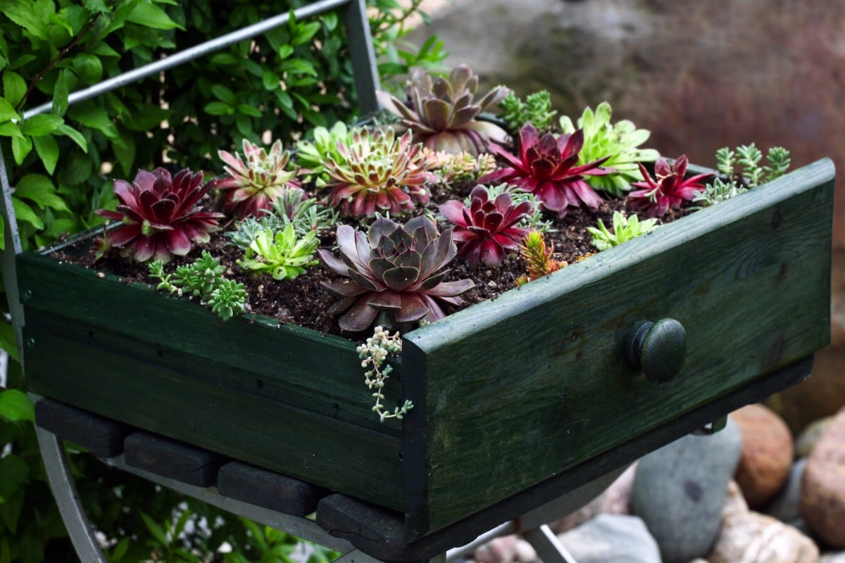 Dresser drawer planter.