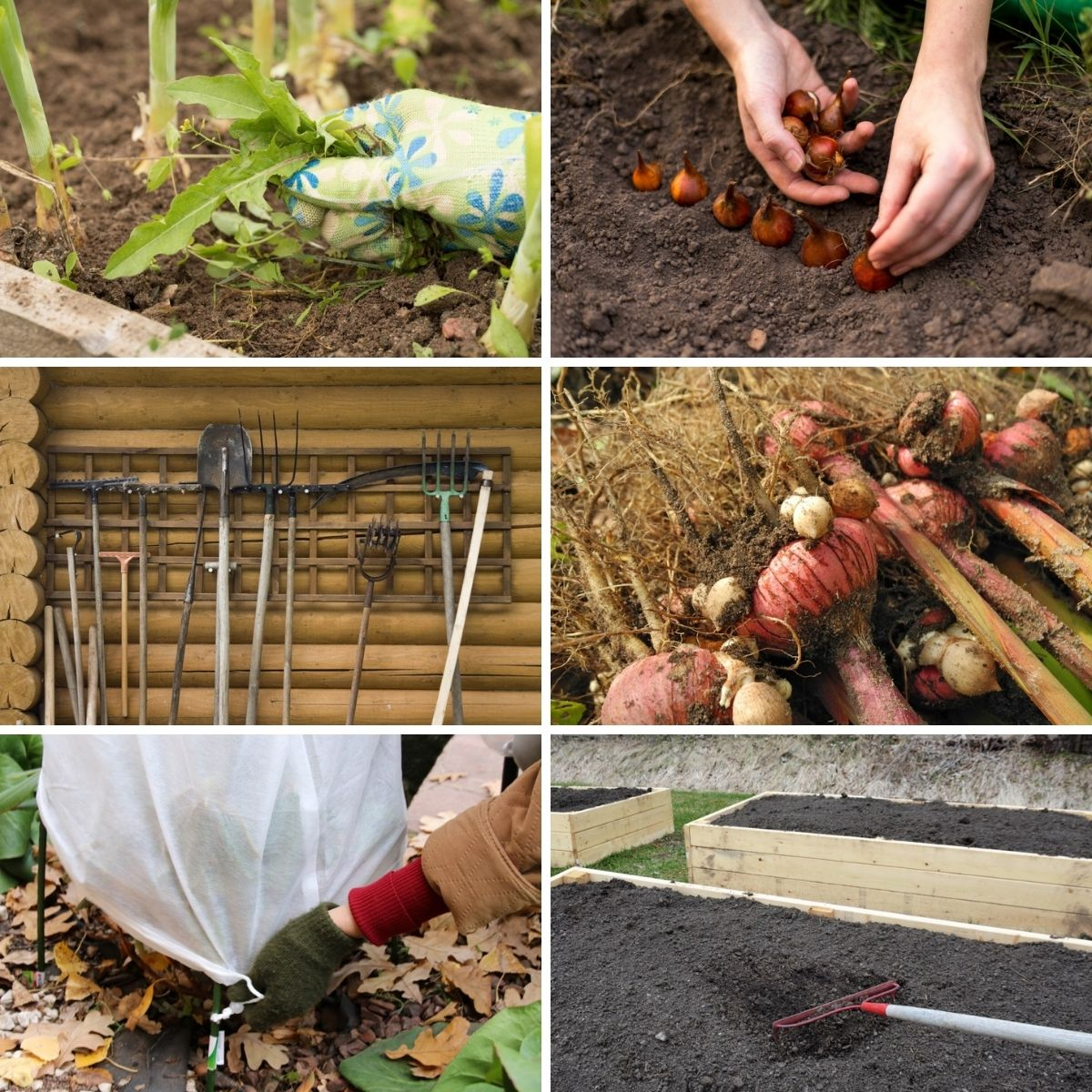 Collage photo featuring fall garden tasks.