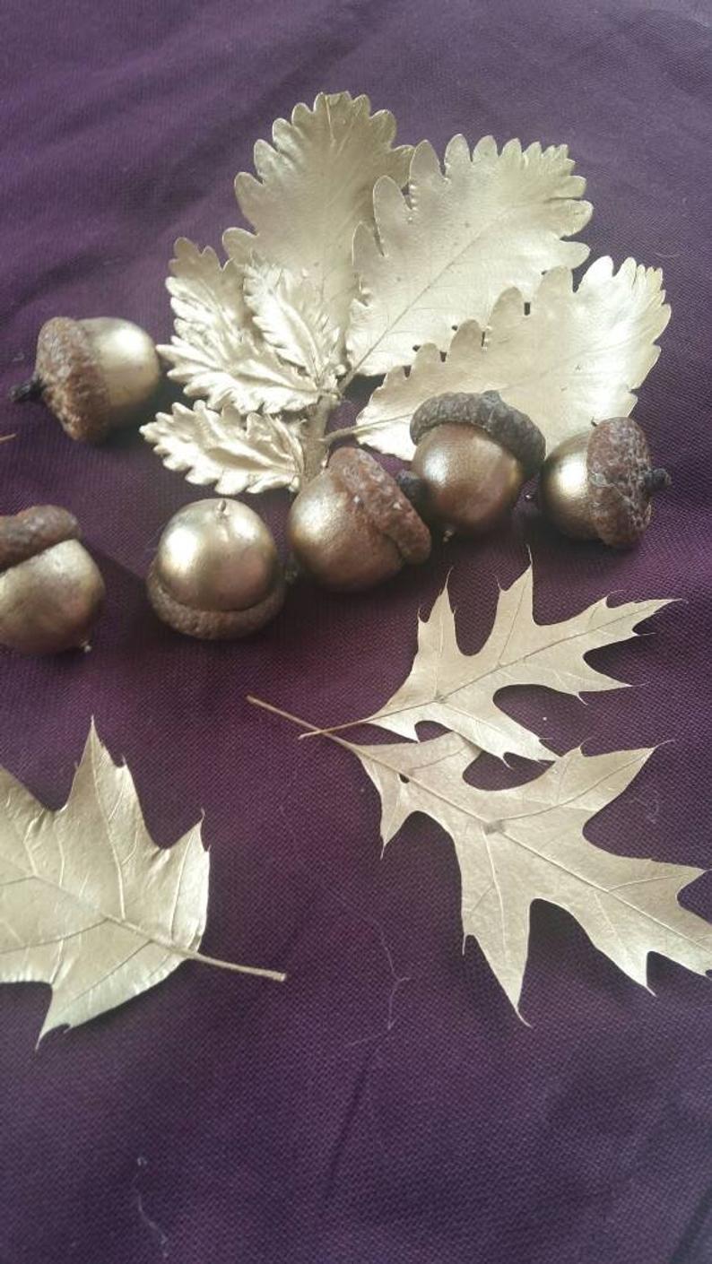 golden oak acorns natural dried acorn nut real Canadian acorn craft supply
