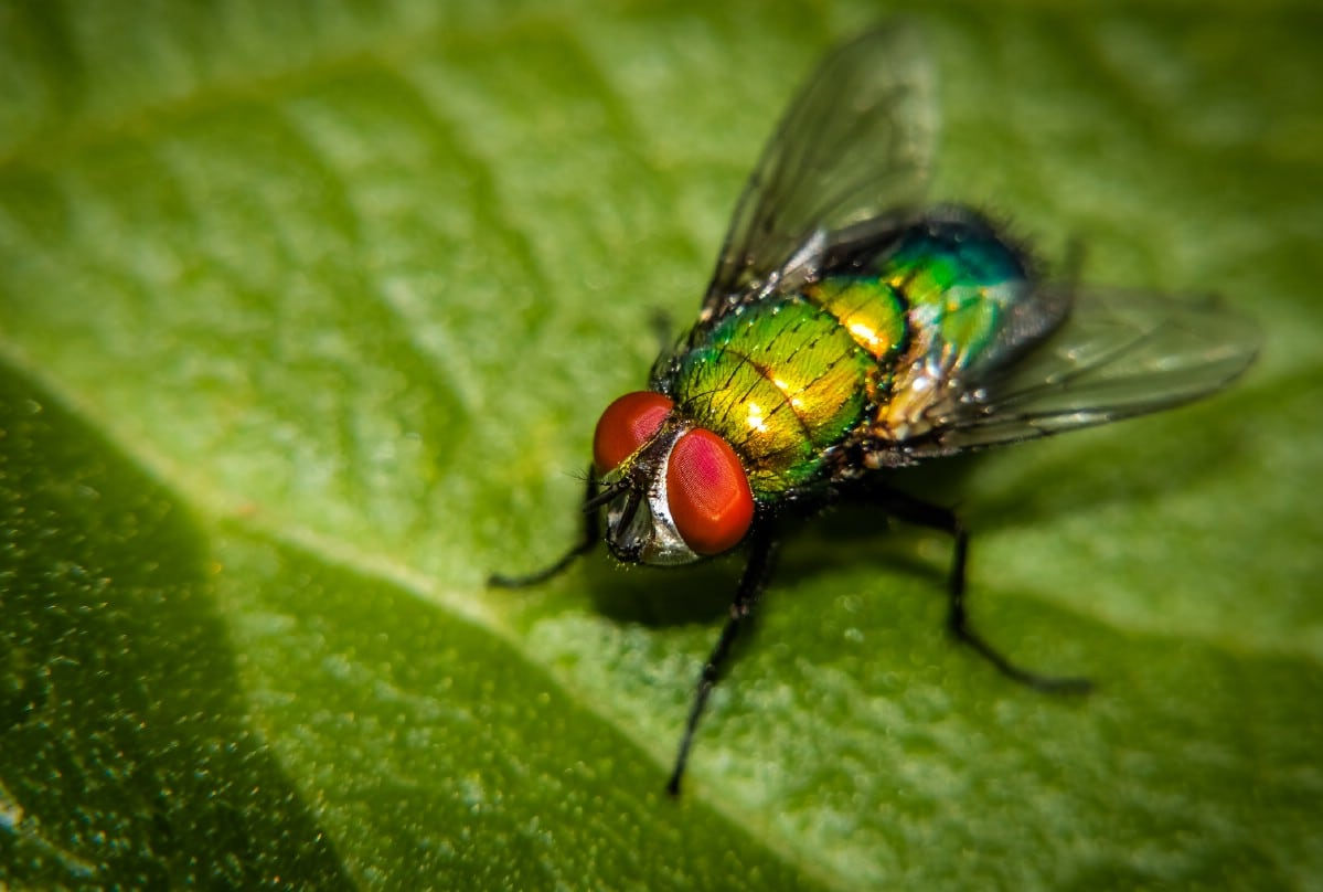 Fly on a green leaf.