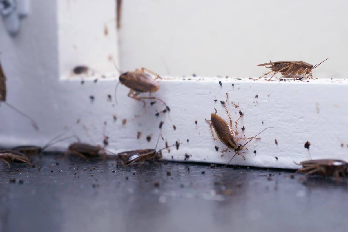 Insects on a door.