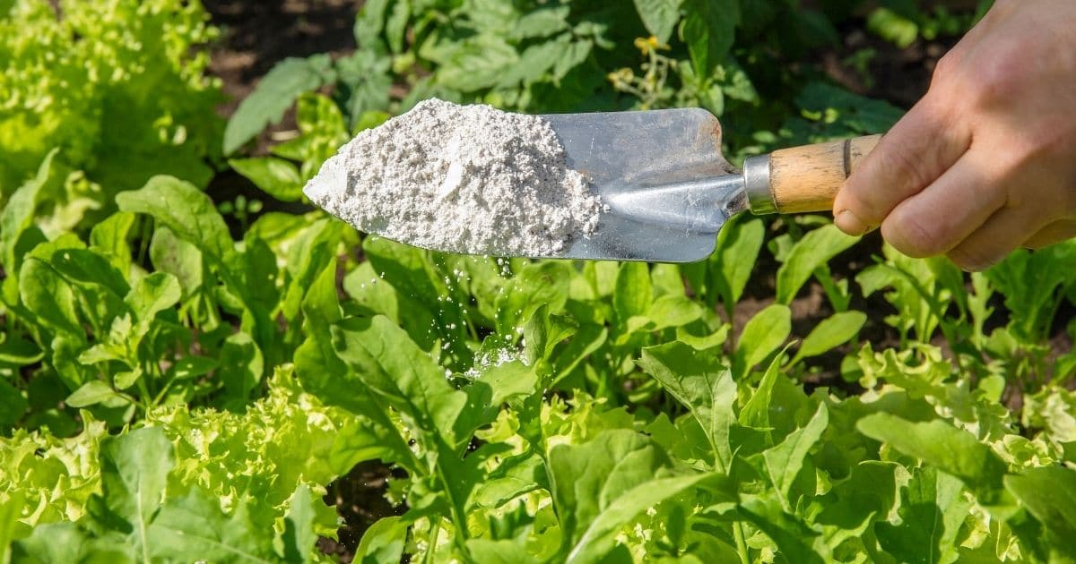 13 Ways To Use Diatomaceous Earth In The Garden Diy Crafts
