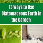 DIY & Crafts • 13 Ways To Use Diatomaceous Earth In The Garden