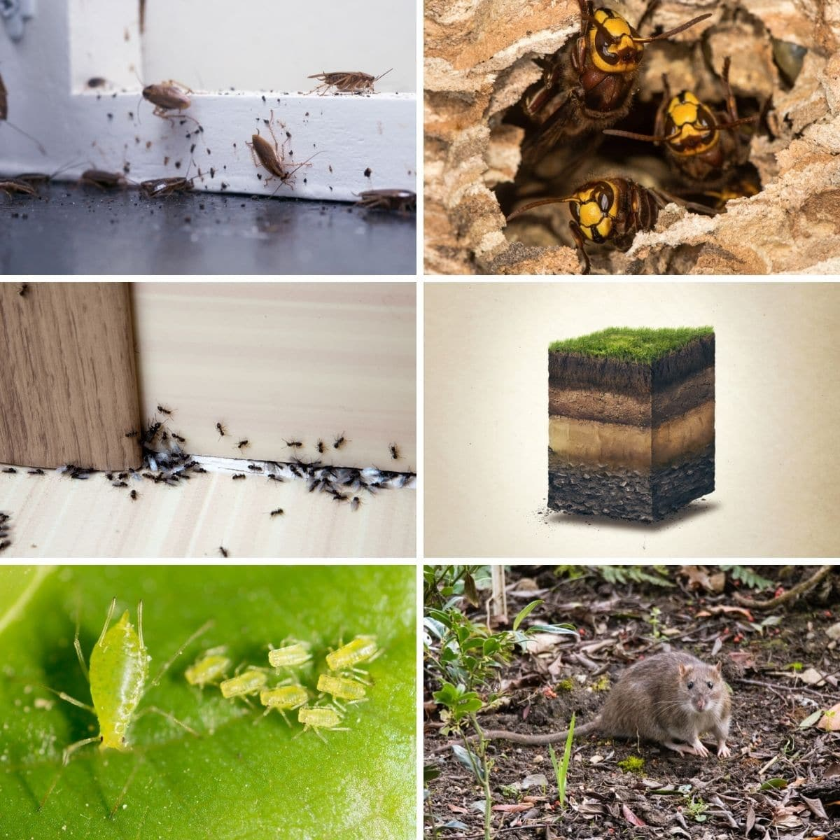 Collage photo featuring many uses of diatomaceous earth.