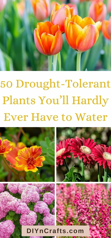 images of drought-tolerant plants