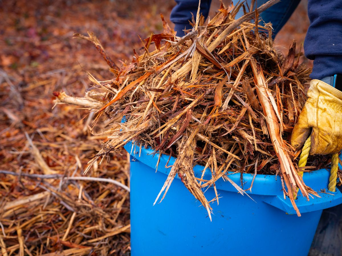 carrying a blue bucket filled with wood chips and dried leaves for Hugelkultur