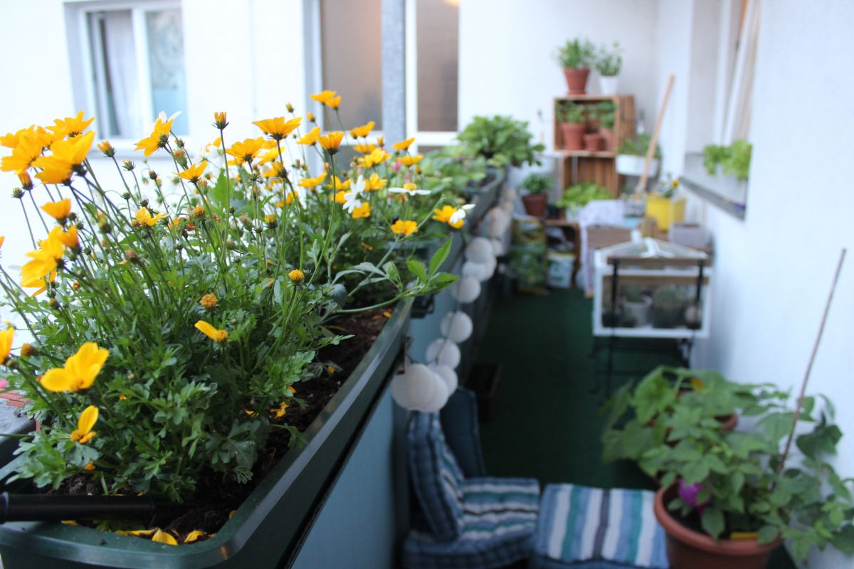 yellow flowers in a small balcony garden