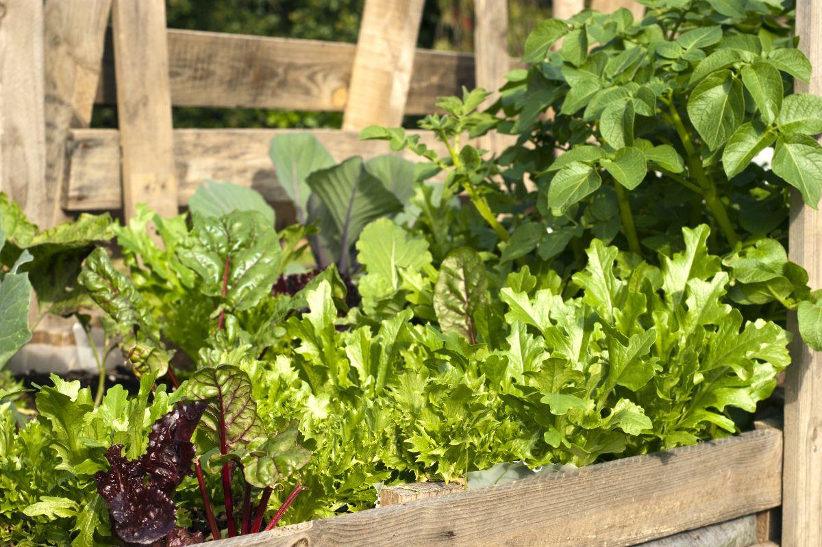 vegetable pallet garden